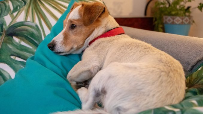 memory foam pillows for dogs